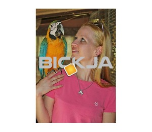 All species of parrots and fertile parrot eggs for sale