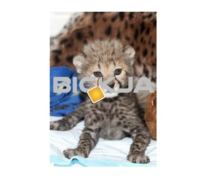 World Wide Exotic Pets For Sale http://worldwideexoticspets.com/